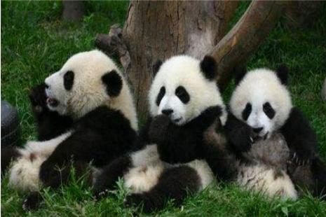 九寨沟黄龙+熊猫乐园/都江堰景区<纯玩>汽车3日游