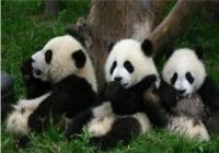 九寨沟黄龙+熊猫乐园/都江堰景区<纯玩>汽车3日游 (春季)
