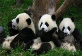 九寨沟黄龙熊猫乐园<纯玩>汽车3日游