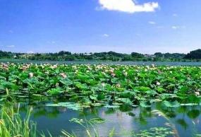 黄龙羌人谷若尔盖九曲花湖《环线》3日游
